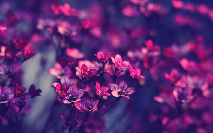 Цветы с доставкой – идеальный подарок по любому поводу