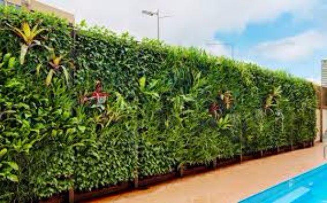 Вертикальное озеленение – красиво с сайтом greenwalls.com.ua