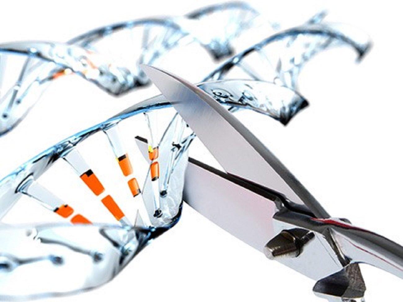 Ученые нашли необычное применение редактору генома CRISPR