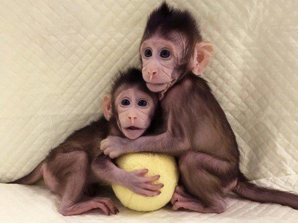 Клонирование домашних любимцев набирает обороты. Возьмутся ли за людей?