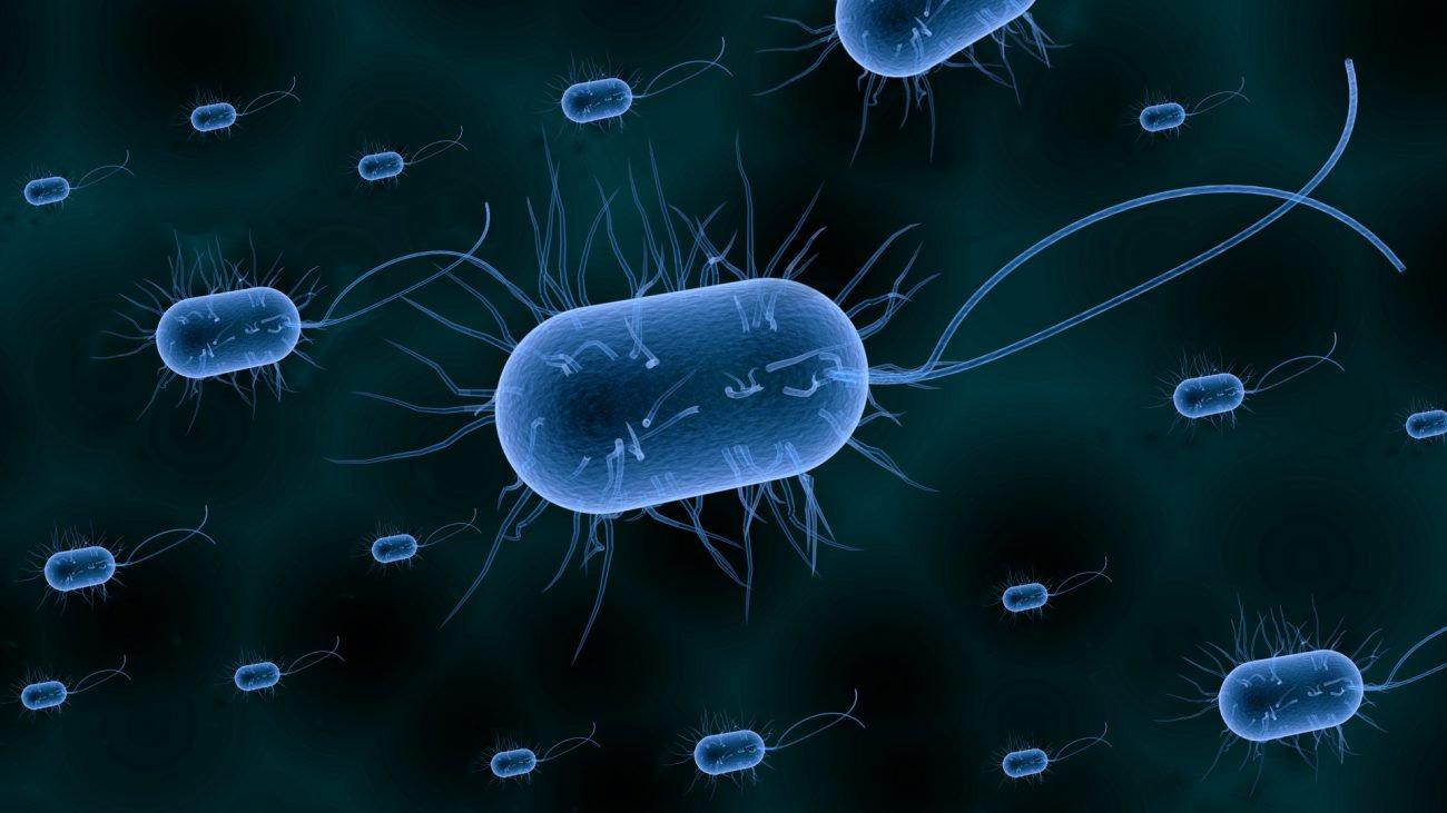 У бактерий обнаружили новый вид памяти