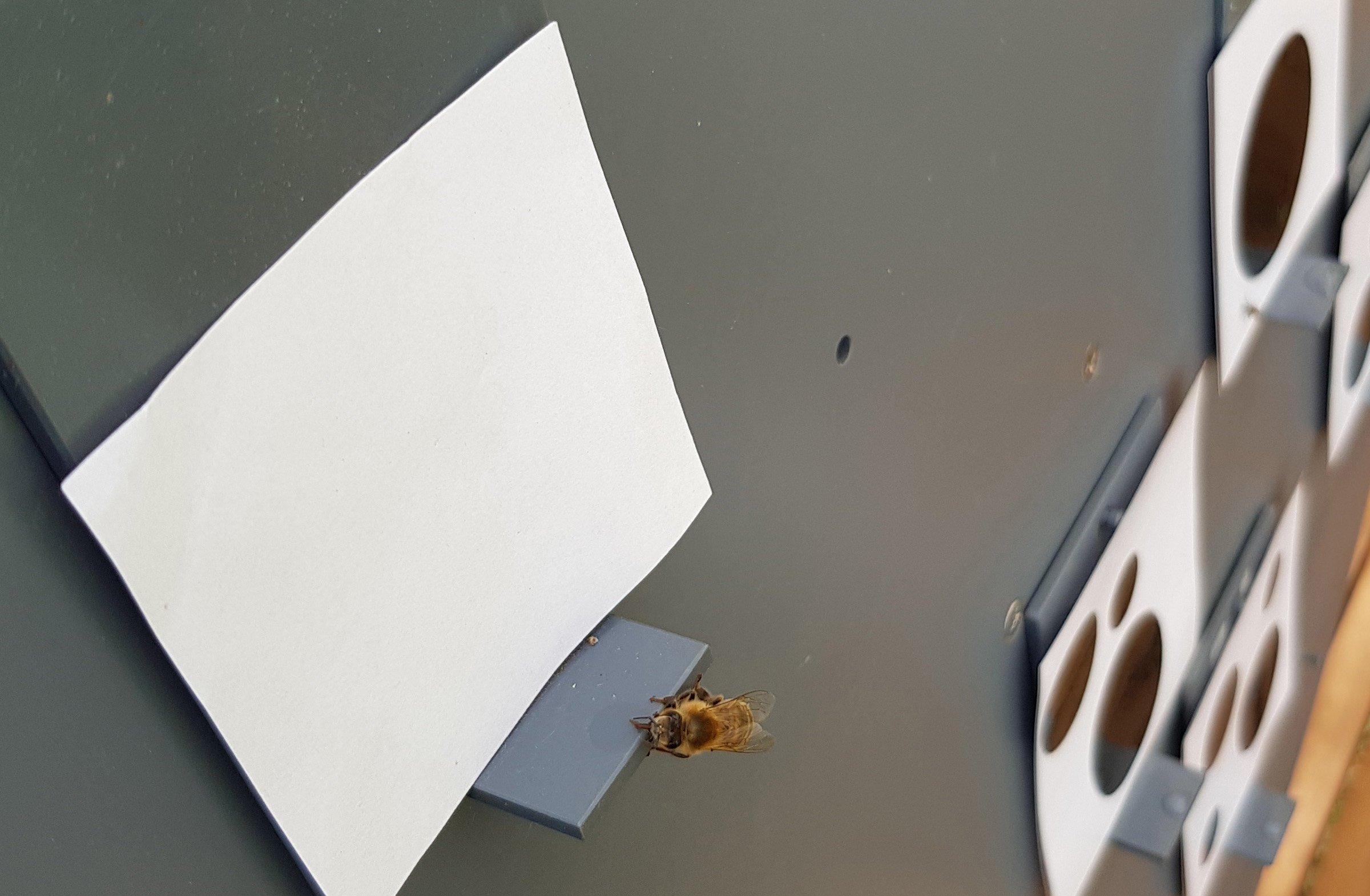 Пчелы понимают, что такое ноль