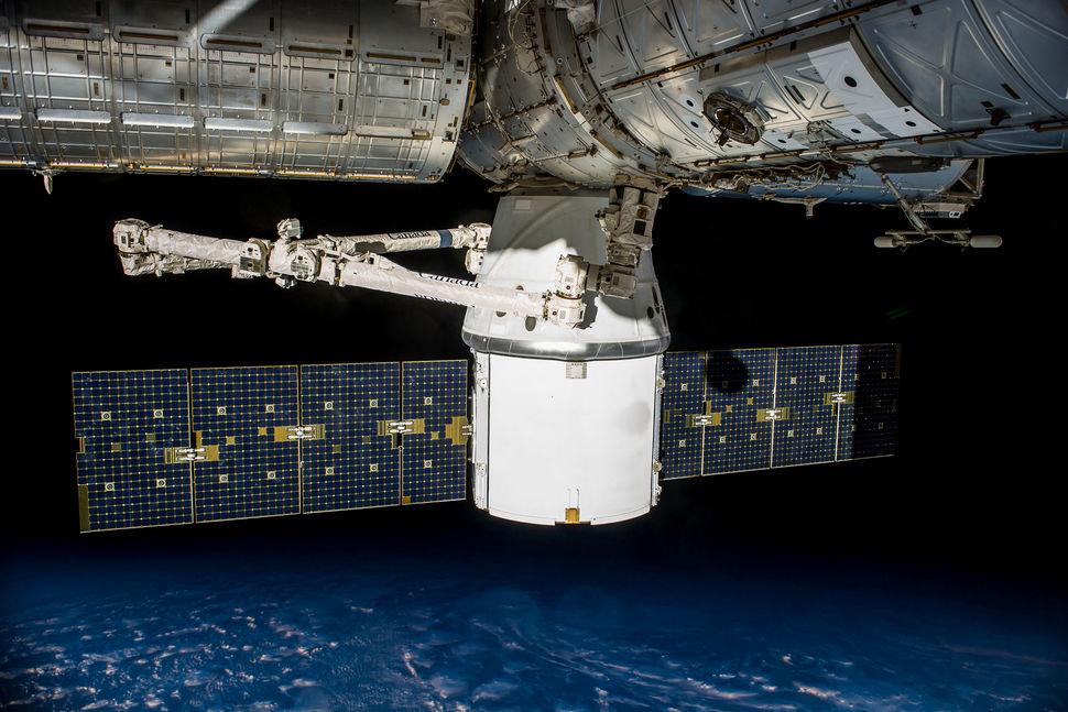 Лекарство от рака, водоросли и мыши: что еще отправят на МКС в рамках будущей миссии?