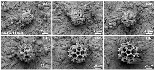 Микроробота научили перемещать живые клетки внутри тела