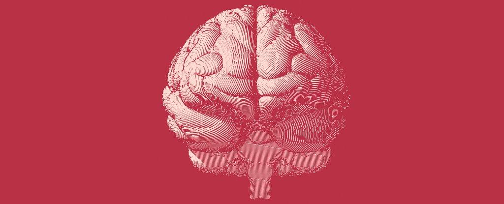Ученые открыли почти 1000 новых генов, связанных с интеллектом