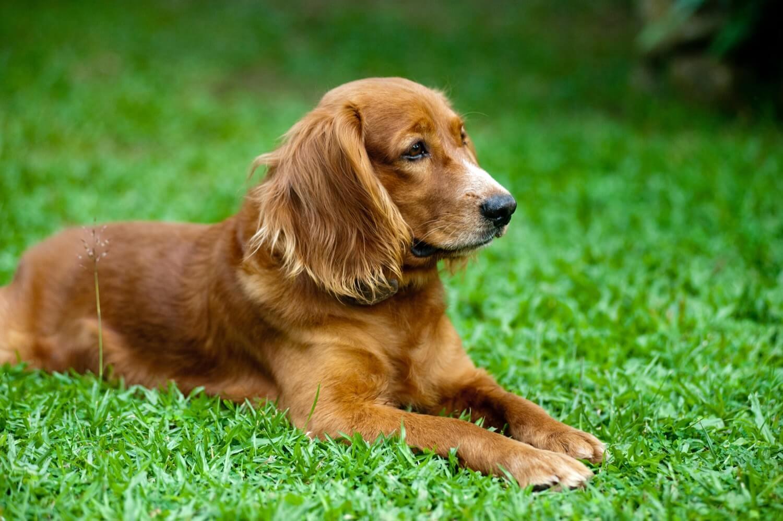 Как общение с собакой влияет на человеческий организм