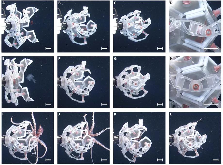 Прости, кальмар: этот робот может ловить хрупких морских существ, не причиняя им вреда