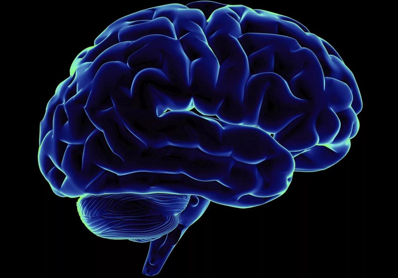 Обнаружены нейроны, отвечающие за сознание