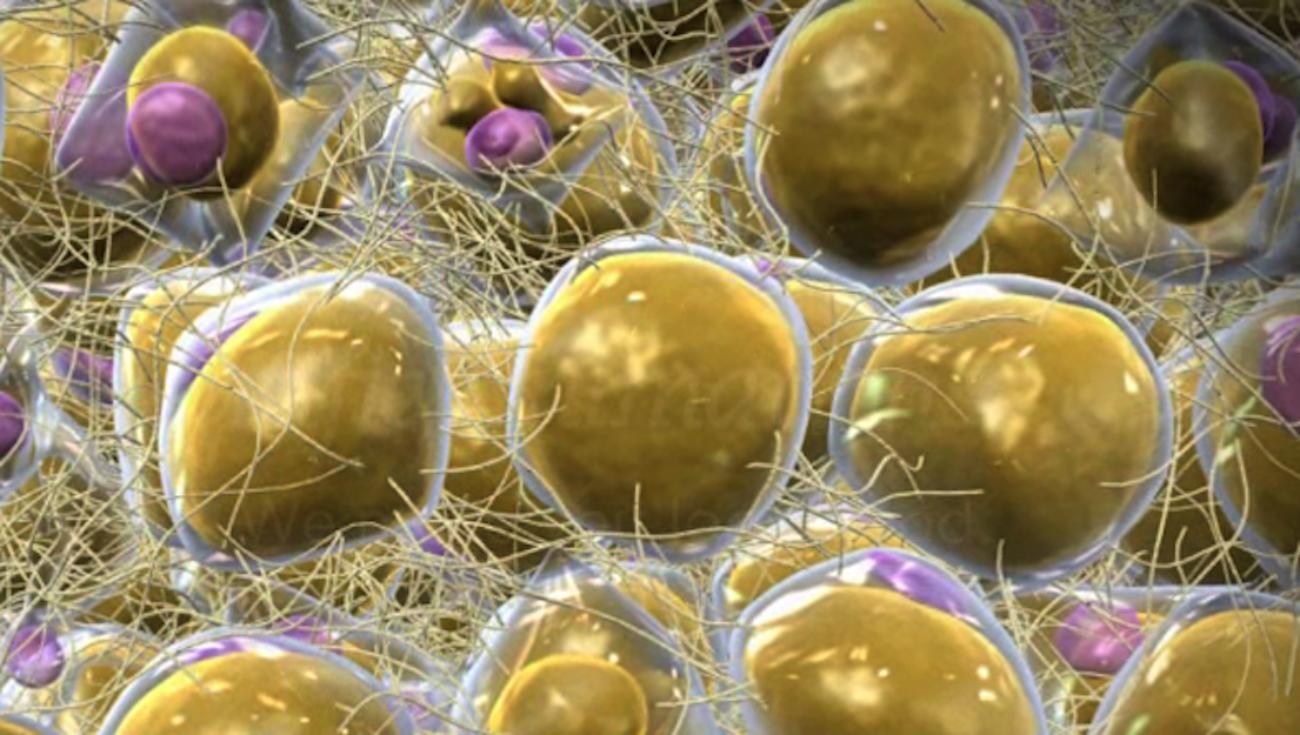 Найден способ измерить давление внутри клетки