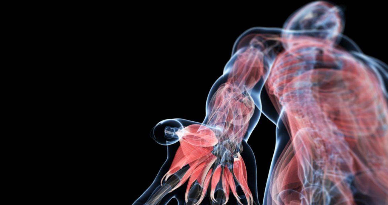 В иммунной системе человека нашли новый орган, который искали очень давно