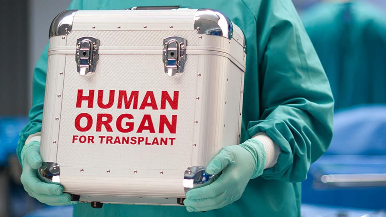 Американский стартап научился безопасно замораживать органы на длительный срок
