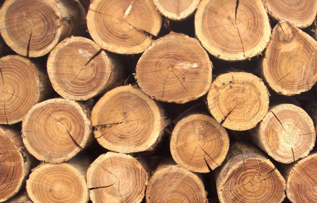 Китайские ученые создали искусственную древесину, которая не горит в огне