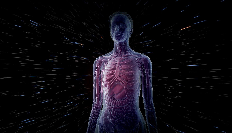 Ученые разрабатывают самую детализированную 3D-модель человеческого организма