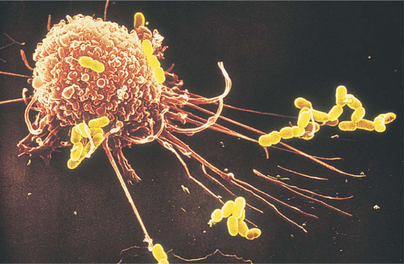 Наповерхности иммунных клеток найдена новая неизвестная структура