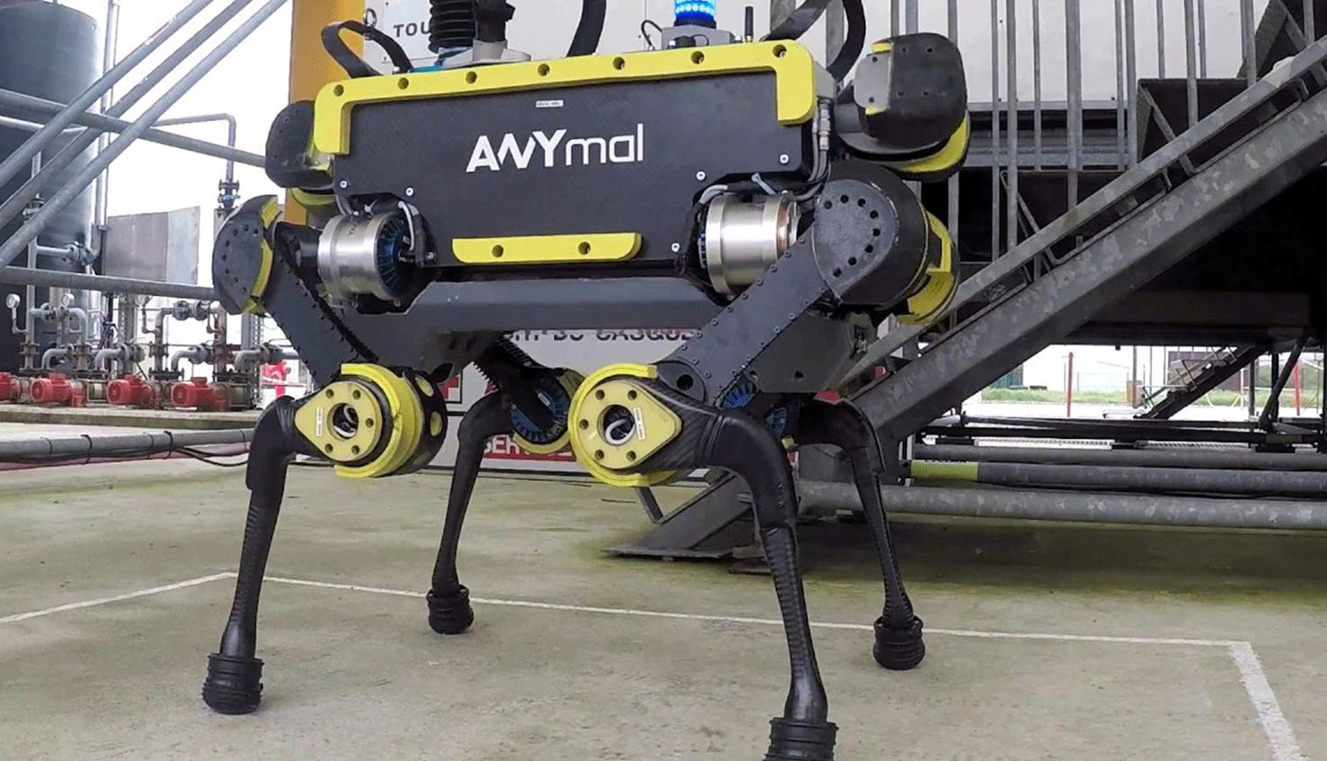 Видео: робот ANYmal выполняет задачи не хуже, чем SpotMini