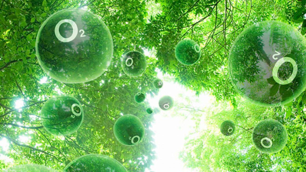 Процесс полу-искусственного фотосинтеза поможет добыть энергию из солнечного света