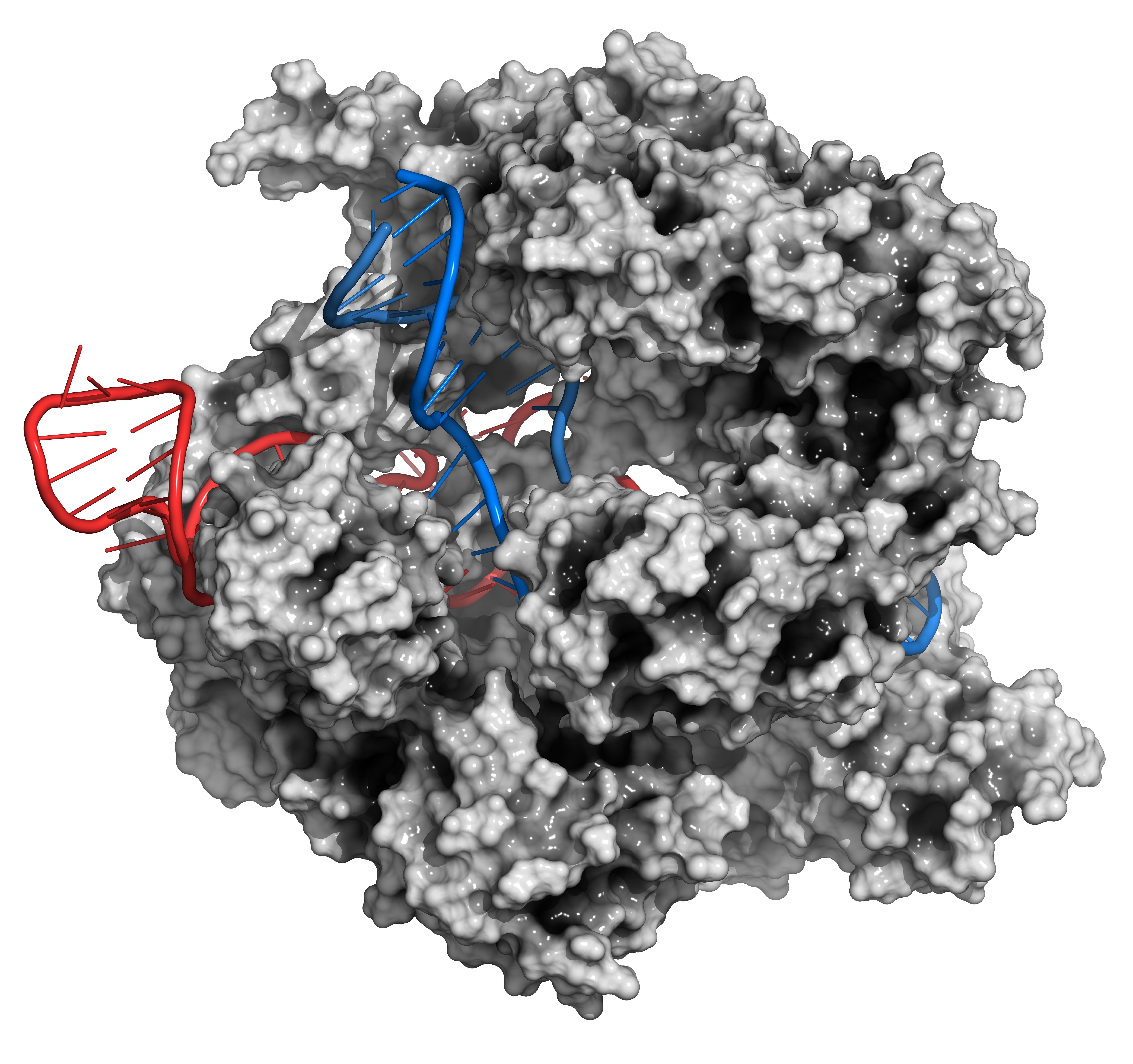 Редактирование РНК может стать следующим этапом развития CRISPR