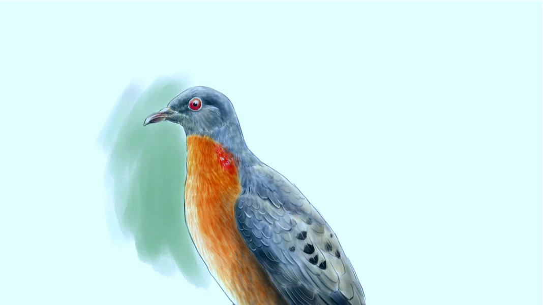 Воскрешение вымерших видов начнется со странствующего голубя