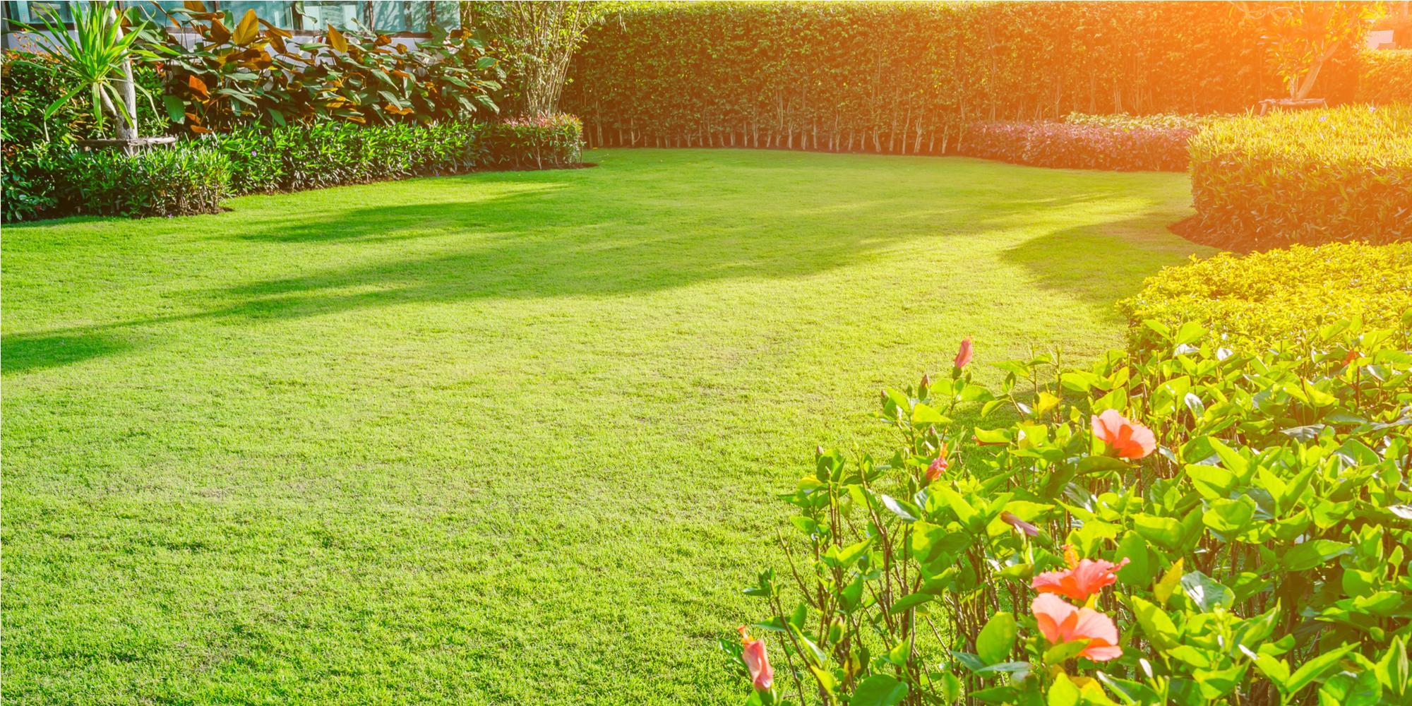 Экологи считают, что от современных газонов больше вреда, чем пользы