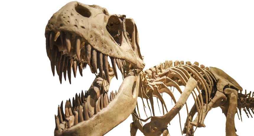 T. rex кусал с невероятной силой: в два раза сильнее, чем любое живое существо