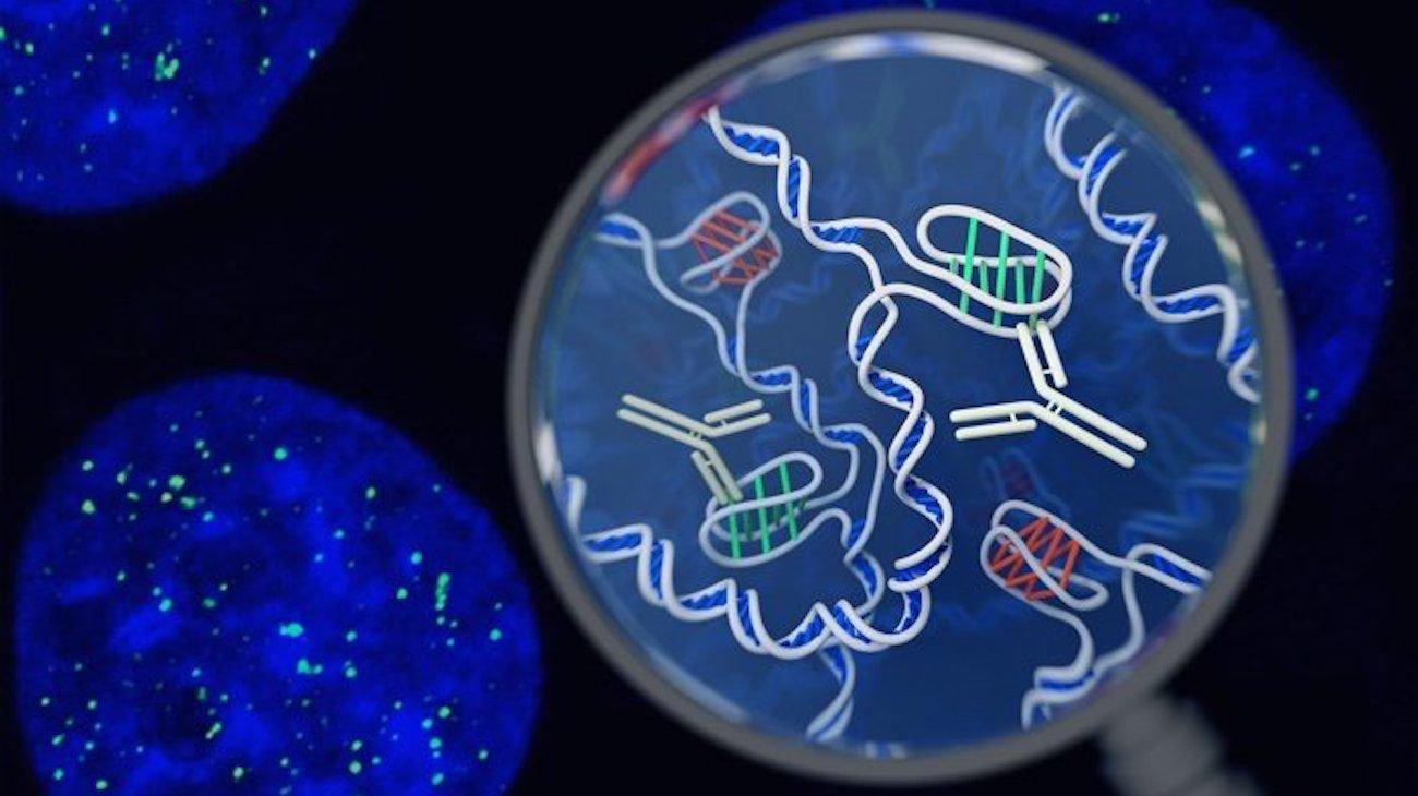 Подтверждено наличие новой структуры ДНК в человеческих клетках