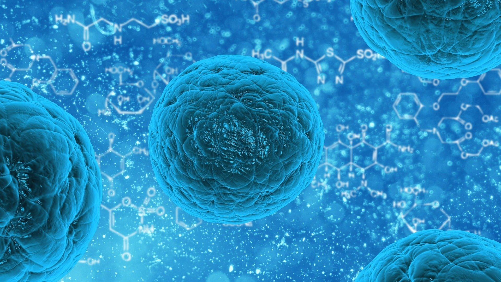 У клеток обнаружили сверхэластичные свойства