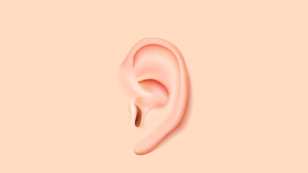 Уши из яблок? Обещания биоинженеров пугают и радуют одновременно
