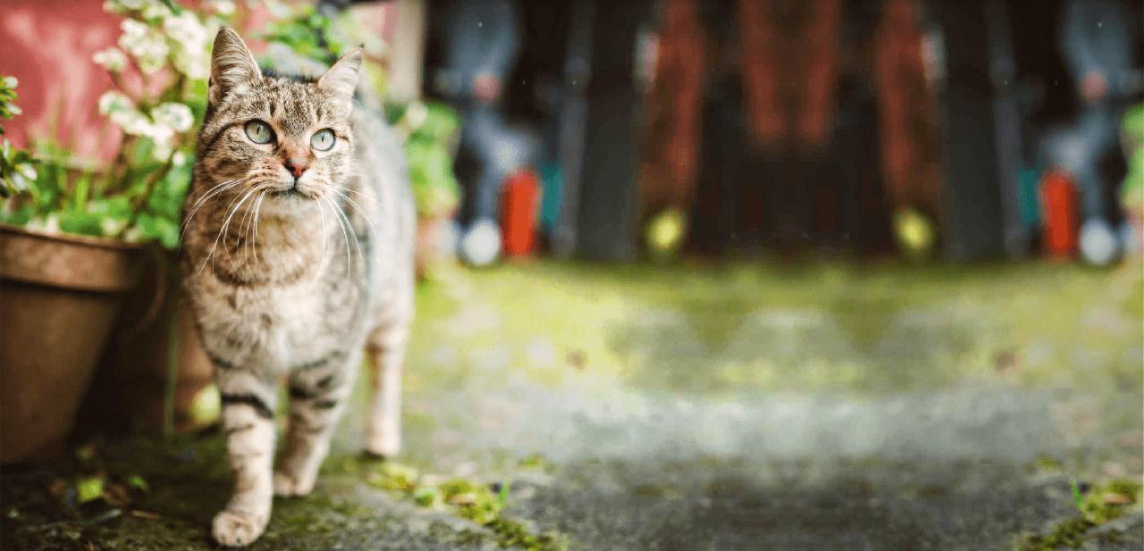 Что делать, чтобы любимый котик хорошо получился на фото?