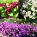 Купить многолетние растения онлайн
